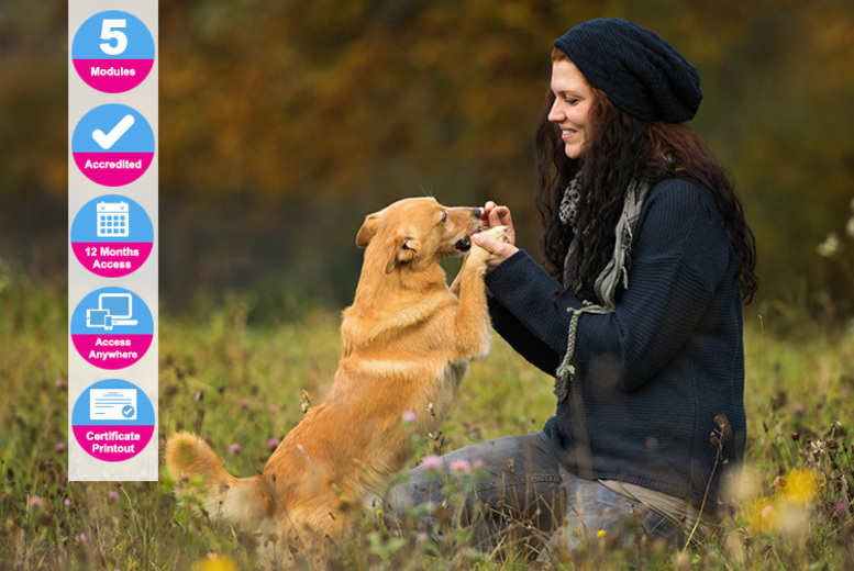 Image of £14 instead of £119 (from Holly and Hugo) for an accredited dog socialisation and obedience masterclass - save 88%