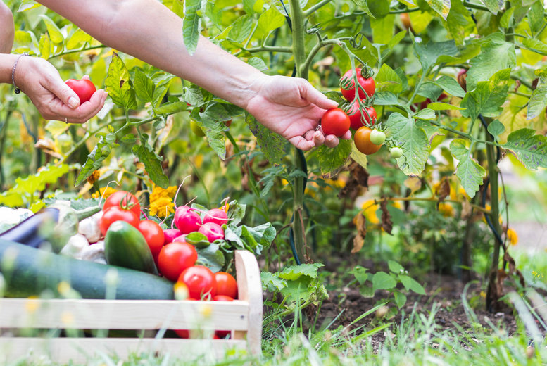 Image of £9 instead of £29 for an online self-sufficient vegetable gardening course from Learning With Experts - save 69%