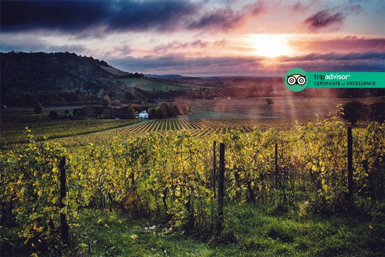 Image of £9 instead of £14 for a courtyard wine tasting experience for one person at Denbies Wine Estate, Surrey. £15 for two, or £28 for four - save up to 36%
