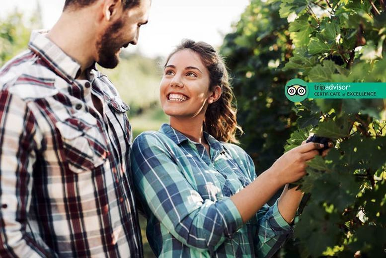 Image of £24 instead of £80 for a vineyard tour at Carr Taylor Vineyard, Hastings with wine tasting and buffet lunch for two people, or £44 for four people - save up to 70%