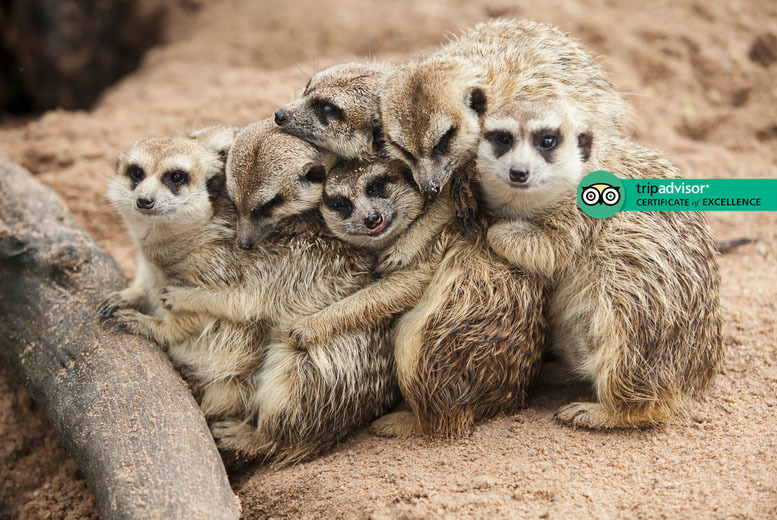 Image of £39 instead of £99 for a one-hour meerkat experience for two people at Hoo Farm Animal Encounters, Telford - save 61%