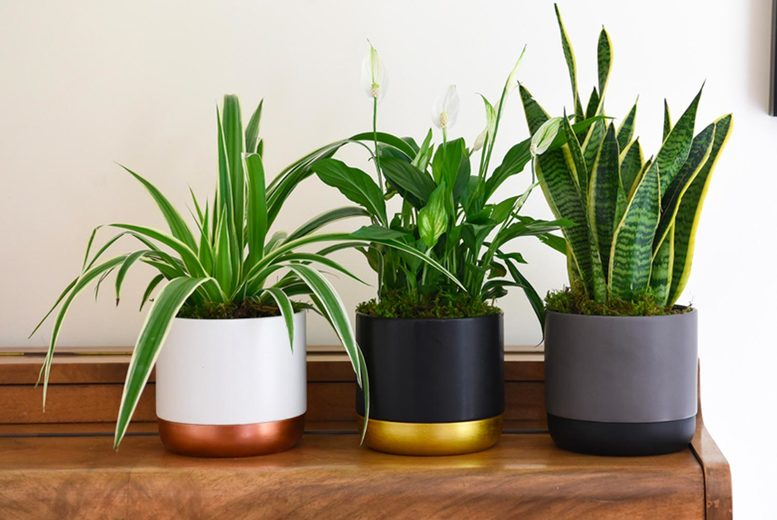 Image of From £14.99 instead of £19.99 for a purifying houseplant collection from Thompson & Morgan - save 25%
