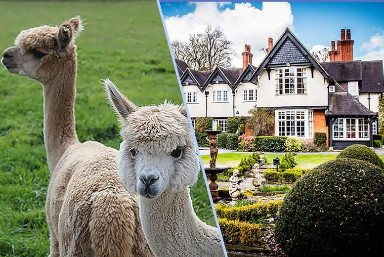 Image of £107 instead of £173.36 for an overnight 4* Mere Court Hotel stay for two people with breakfast and one glass of Prosecco each, and a 60-minute alpaca experience with farm entry at White Peak Alpaca Farm - save up to 38%