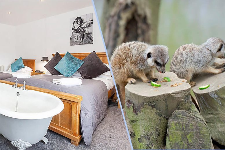 Image of £104 for an overnight stay at 4* York Boutique Lets in a luxury converted stable for two people with a bottle of Prosecco, and a 'meet the meerkat' experience and park entry at Bridlington Birds of Prey & Animal Park