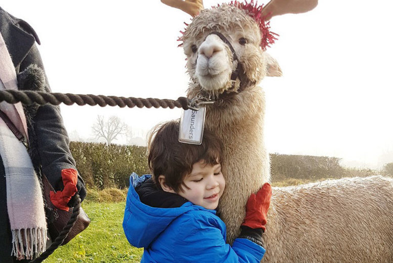Image of £16 instead of £35 for a 90-minute 'Walking with Reinpacas' experience for one person at Charnwood Forest Alpacas, Ashby-de-la-Zouch. £30 for two people - save up to 54%
