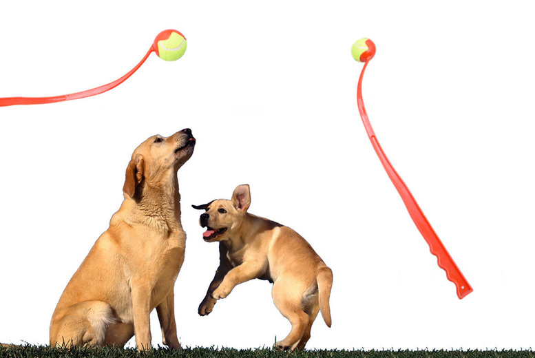 Image of £7.99 instead of £19.99 for a dog toy ball launcher from Eshaan Trading - save 60%