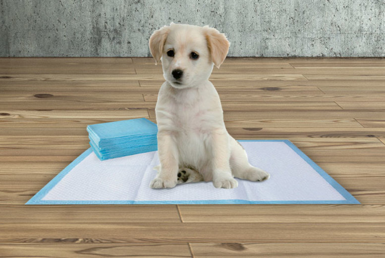 Image of £10.99 for a pack of 100 40cm x 50cm puppy pads, £19.99 for 100 60cm x 60cm puppy pads or £23.99 for 100 60cm x 90cm puppy pads - perfect for toilet training your dog!