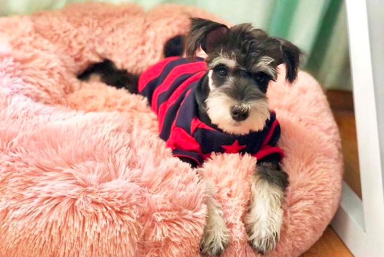 Image of From £12 for a plush round pet bed from Arther Gold - choose your size and save up to 76%