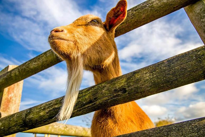 Image of £7 instead of £13 for family entry for two adults and two children to an immersive city farm with over 100 animals at Gorse Hill City Farm, Leicester. £9 for two adults and four children - save up to 46%
