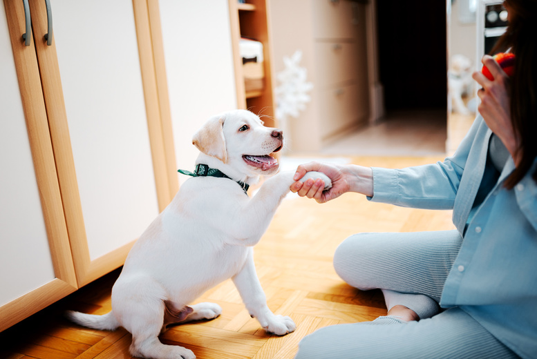 Image of £16 instead of £199 for an online How to Train a Puppy course from Pet Addict - save 92%