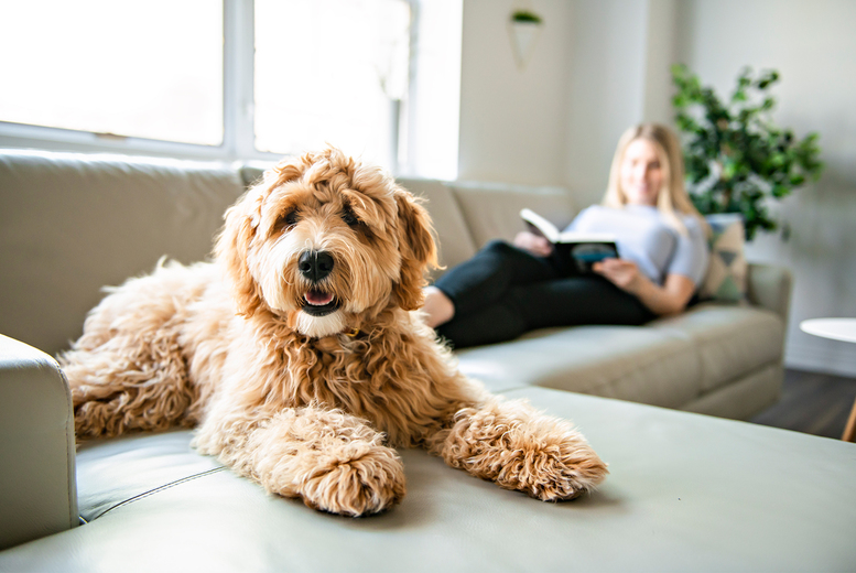 Image of £16 instead of £199 for an online dog behaviour and psychology course from Pet Addict - save 92%