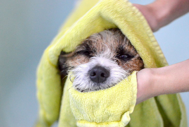 Image of £16 instead of £199 for an online dog and cat grooming course from Pet Addict - save 92%