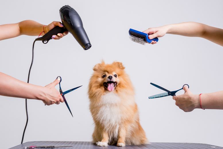 Image of £10 for an online dog grooming, bathing and first aid course from Academy for Health & Fitness