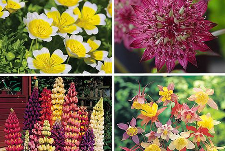 Image of From £4.99 for a 10 pack of flower seeds from Thompson & Morgan - choose your quantity!