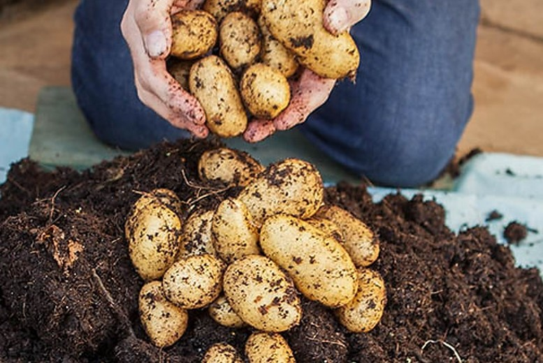 Image of From £9.99 for a Potato Growing and Refill Kit from You Garden Ltd t/a Blooming Direct - save up to 56%
