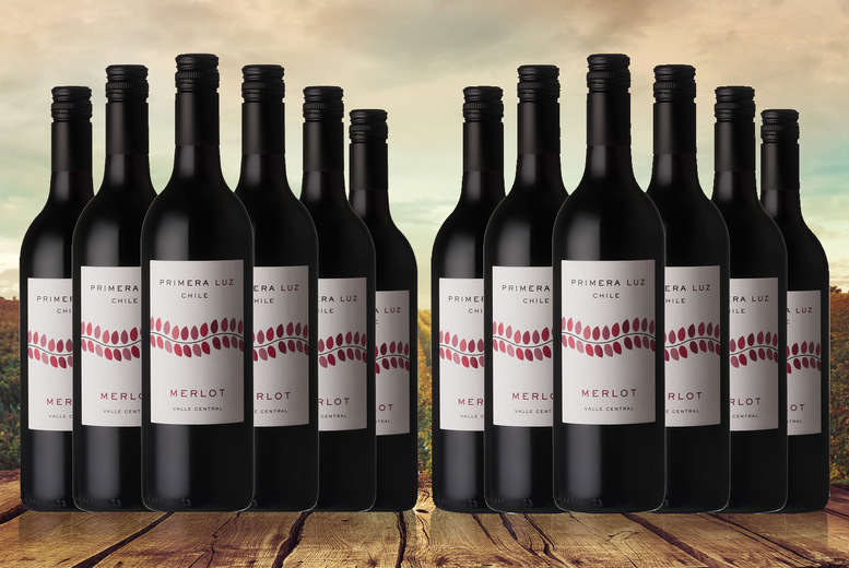 Image of £29 instead of £46.5 for Six cases of Primera Luz Chilean red, £52.99 for 12 cases from The Great Wine Co. - save up to 38%