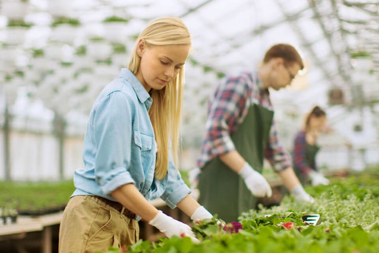 Image of £10 for an online horticulture and organic gardening course from Academy for Health & Fitness