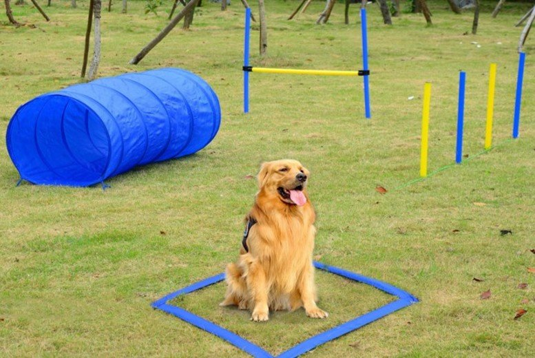 Image of From £19.99 for a Adjustable Dog Agility Training Set - 2 Types! from Mhstar Uk Ltd - save up to 61%