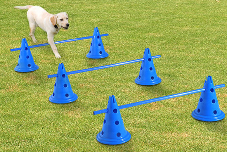 Image of From £29 for dog agility equipment from Mhstar Uk Ltd - save up to 52%
