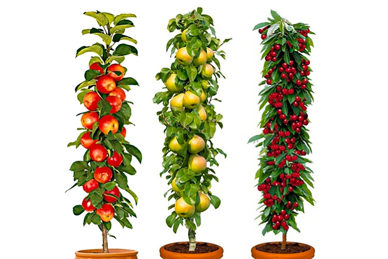 Image of £29.99 instead of £74.99 for a set of three pillar fruit trees or £44.99 for a set of six trees from Personal Choice - save up to 60%