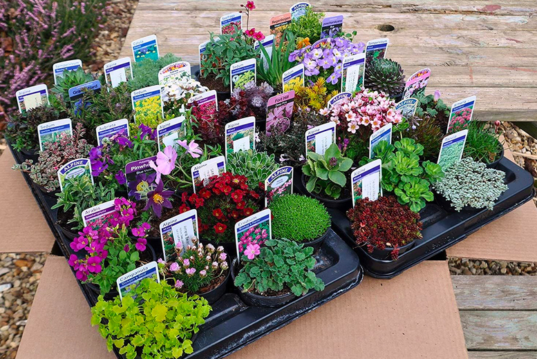 Image of £19.99 instead of £44.99 for a bundle of six mixed plants, £34.99 for 12 plants or £49.99 for 18 plants from Personal Choice - save up to 56%