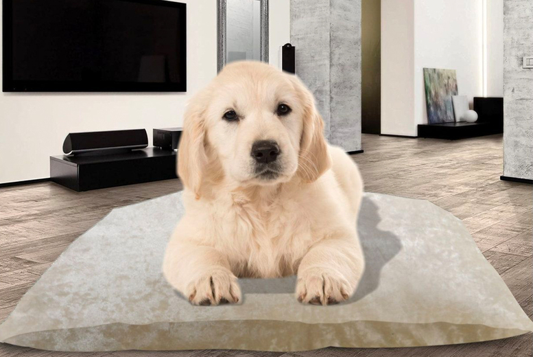 Image of From £12.99 instead of £34.99 for a pet cushion bed, choose from two sizes and save up to 63%