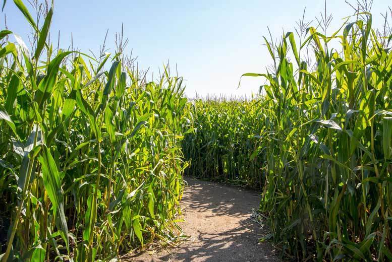 Image of £6 instead of £13 for entry for two people to the Maize Maze and farm at Boston Park Farm, £10 for family entry for two adults and two children - save up to 54%