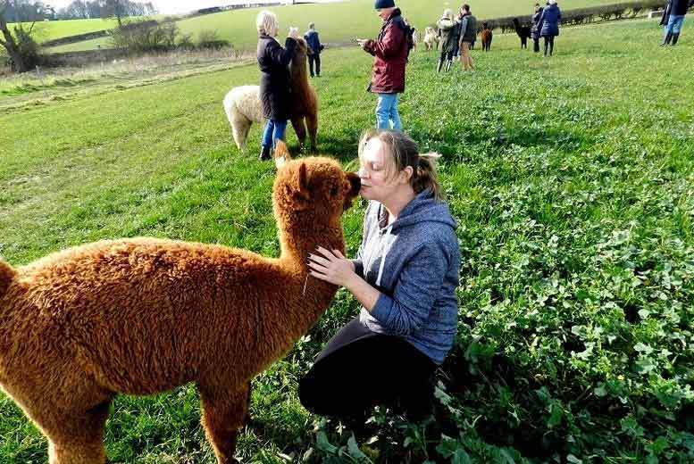 Image of £49 instead of £98 for a 90-minute alpaca experience for two people and an afternoon tea to share at at Charnwood Forest Alpacas - save 50%