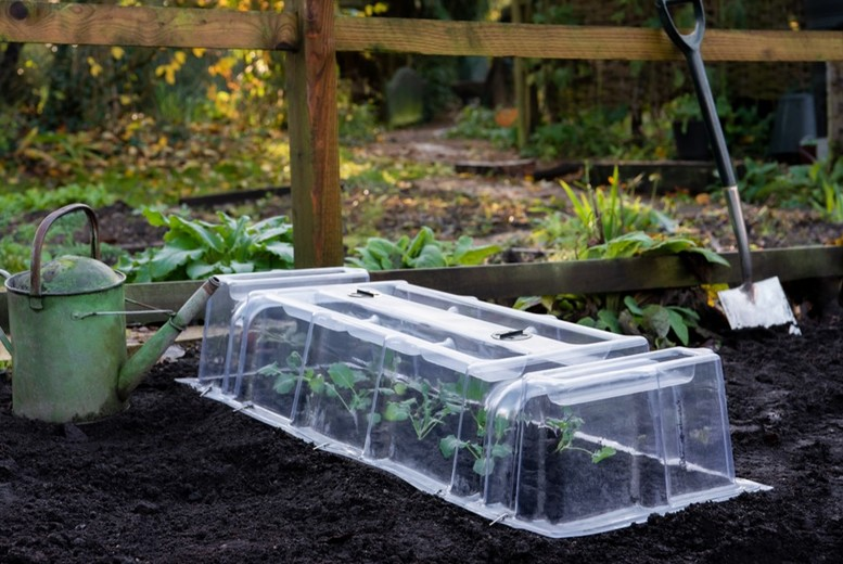 Image of From £16.99 for a Mini Greenhouse Cloche - 2 Types! from Thompson and Morgan - save up to 32%