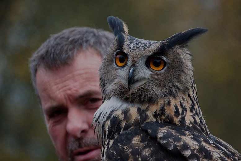 Image of £16 instead of £55 for a two-hour falconry experience at Hawksflight Falconry, Burton upon Trent, or £19 for three hours - save up to 71%