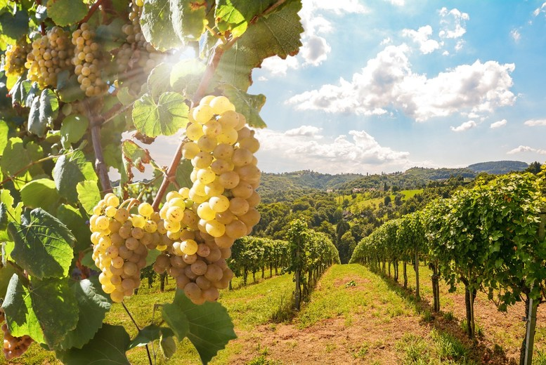 Image of £39 instead of £50 for a guided Carr Taylor Vineyard tour for two people from Into The Blue, Kent including a wine tasting session and Ploughman's lunch with a glass of wine - save 22%
