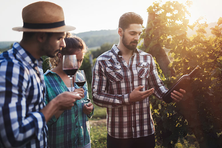 Image of £40 instead of £55 for a vineyard tour and two-course lunch for two people from Into The Blue, Errol, Perthshire, including a wine tasting session and a bottle of wine to take home - 27%