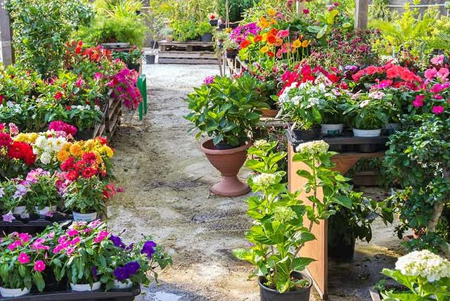Charming £9.99 Instead Of £39.99 (from Gardening Direct) For 170 Spring Bedding  Plants, Or £19.99 For 340   Save Up To 75%