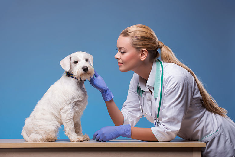 The Best Deal Guide - £24 instead of £349.99 for an online veterinary assistant training course from Oplex Careers - save 93%