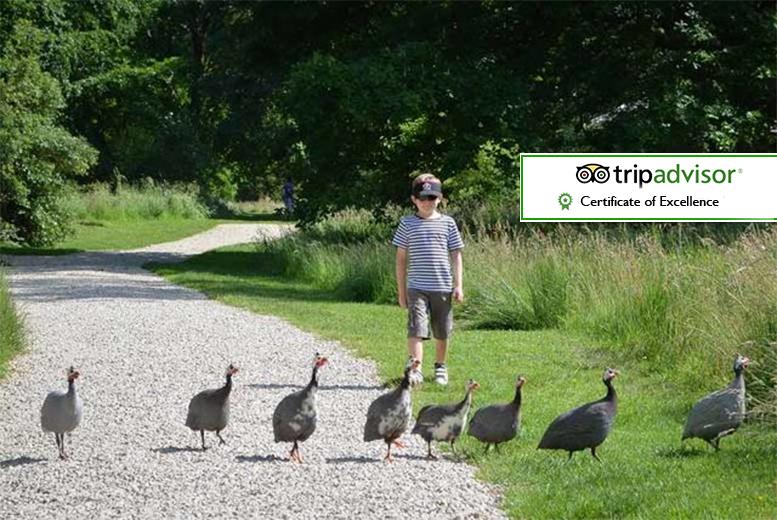2 Yorkshire Arboretum Tkts - Family Upgrade!