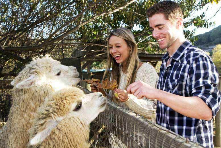 DDDeals - £6 instead of £13 for entry to The Llama Park for one adult and one child, or £10 for entry for two adults and two children - save up to 54%