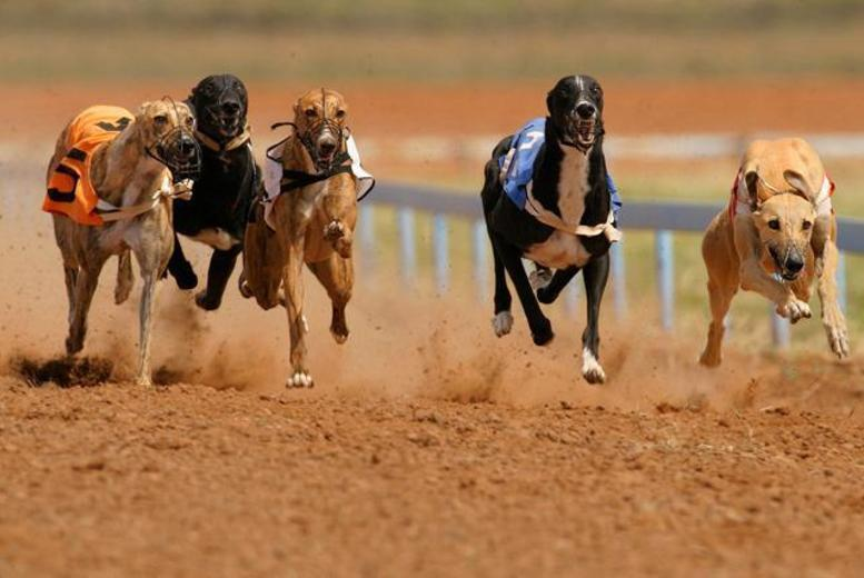 Dog Racing, Burger & Drink for 2 or 4 @ Drumbo Park