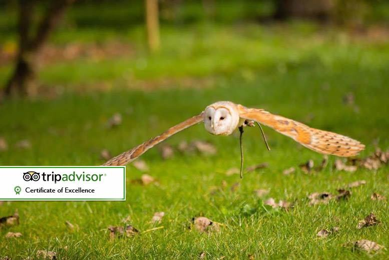 The Best Deal Guide - £14 for a 90-minute falconry experience for one person, £25 for two people at Fixter's Falconry, Lincolnshire