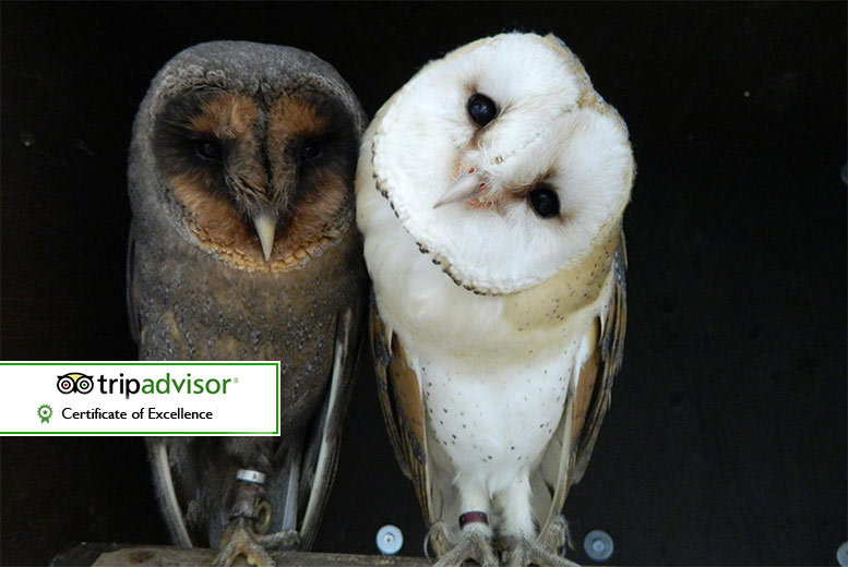 The Best Deal Guide - £29 instead of £65 for a twilight owl experience for two people or £44 for four people at Kirkleatham Owl Centre - save up to 55%