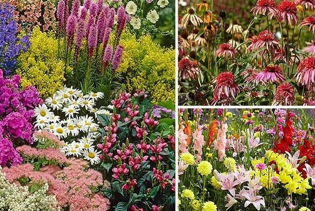 Collection of 10 xl perennial border plants plants flowers deals 24 instead of 7399 from plant store for a collection of ten extra large perennial border plants save 68 mightylinksfo