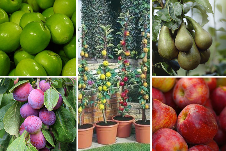 Image of From £19 for a fruit tree collection - choose from two collections from PlantStore - save up to 68%