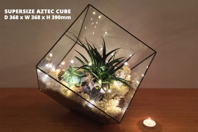 Indoor Succulent Terrarium With Lights 5 Options Shopping