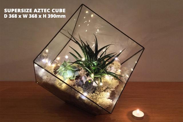 Indoor Succulent Terrarium With Lights 5 Options Shopping